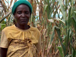 9 mevrouw Chitseko in maisveld in Nduta, Balaka